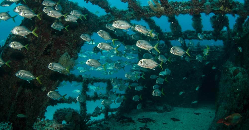 Safe Wreck Diving