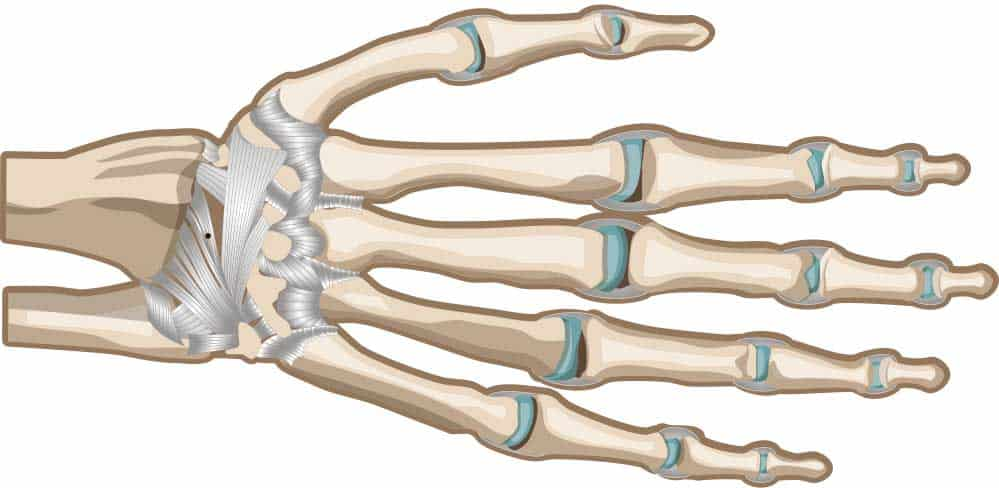 Hand Ligaments