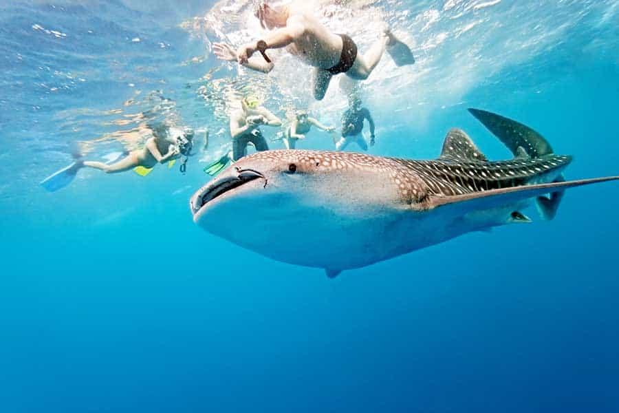 Snorkeling in deep water